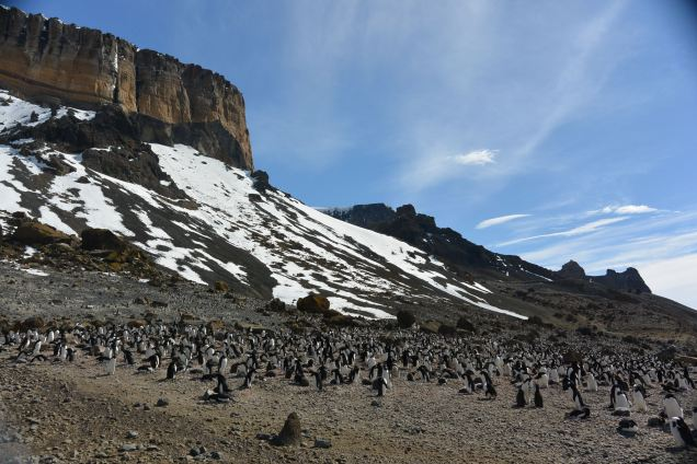 Come out to Antarctica, we'll have a party!
