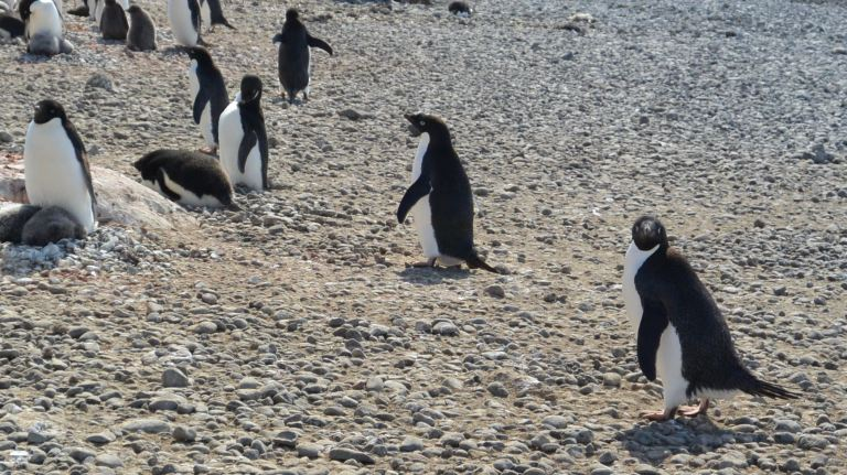"Penguin on the right: ""Do you SEE what I'm dealing with? Please take me with you!"" ""Wait - you eat birds? Ugh."""